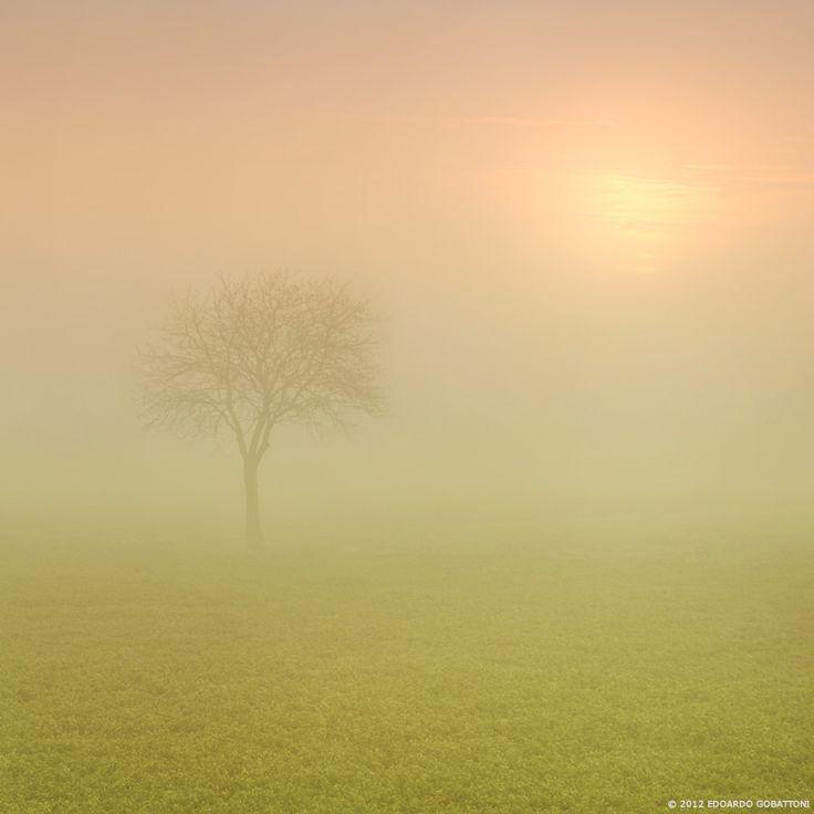 Mystic fog