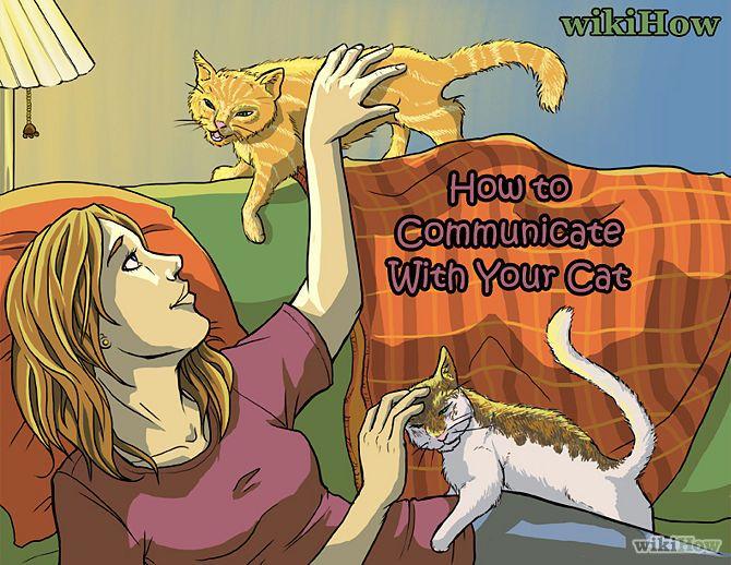 Como Se Comunicar com seu Gato