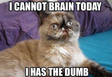 I has the dumb.