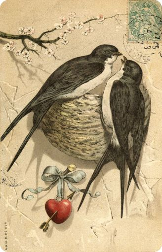 Vintage Valentine's day postcard, swallows and apple blossoms