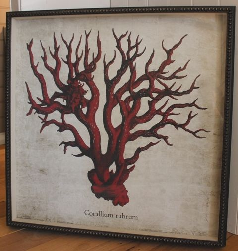 This Red Coral Print is featured in a unique shadow box frame.