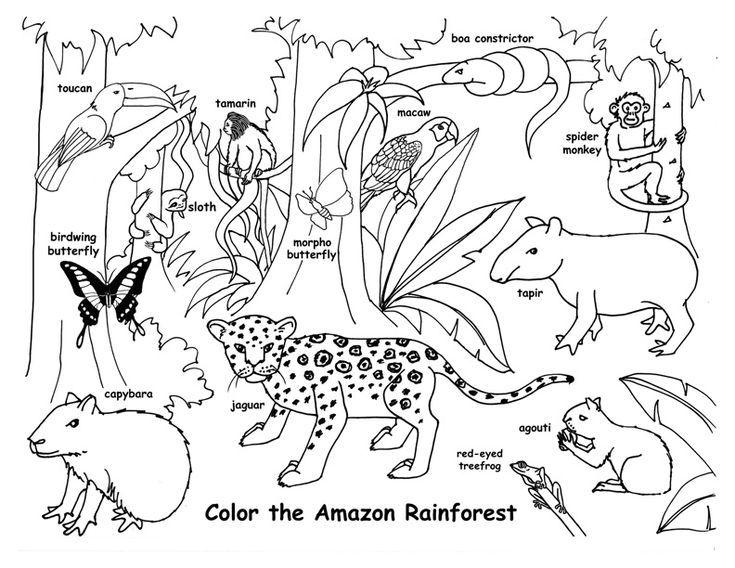 Zeichenunterricht Fur Ein Ganzes Amazon Rainforest Bild Pdf Www Exploringnatu Drawing Lesso Rainforest Animals Animal Coloring Pages Animal Habitats