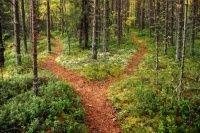 Шутки полесских духов https://mensby.com/life/interesting/1158-belorussian-woodlands  Белорусское Полесье знаменито не только своей красивой природой, но и бережным отношением к связанному с ней фольклору.