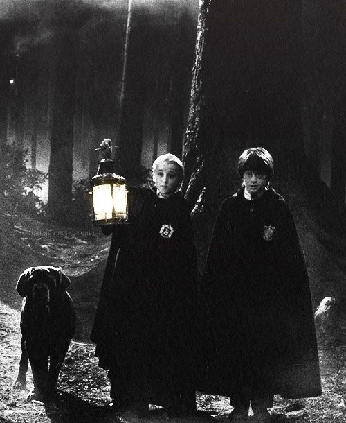 Fang, Draco, and Harry in the Forbidden Forest (Harry Potter and the Philosopher's Stone).