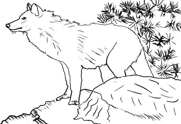 Wolf Wolf Up In The Hill Coloring Page Horse Coloring Pages