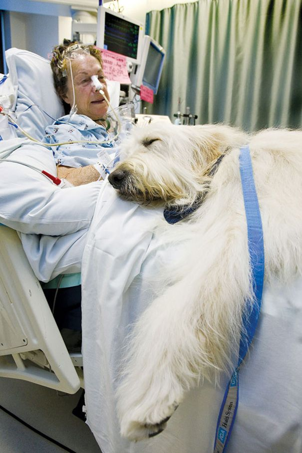 Every hospital and nursing home should allow this! It's a scientific fact that animals help in healing, stress reduction and lower blood pressure!