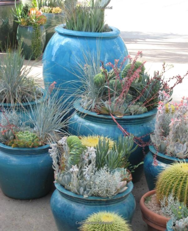 44 best images about show to monica on pinterest gardens container plants and bright flowers - Succulent container gardens debra lee baldwin ...