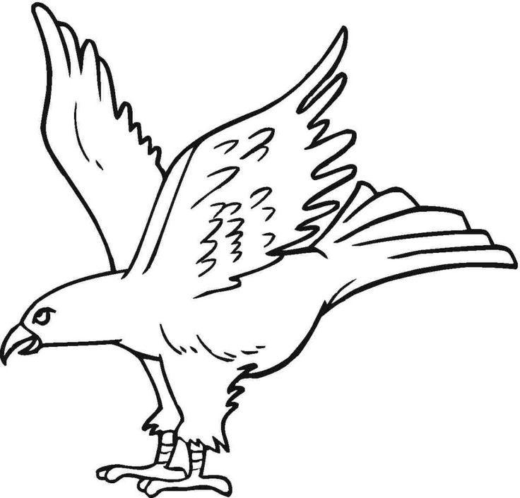 21 best Eagle Coloring Pages images on Pinterest | Coloring books ...