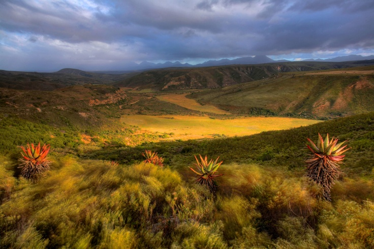 Nauga valley, Gondwana Game Reserve, Garden Route, South Africa
