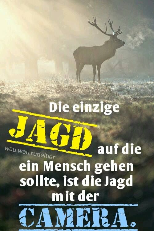Die einzige #JAGD auf die ein MENSCH gehen sollte, ist die Jagd mit einer CAMERA.