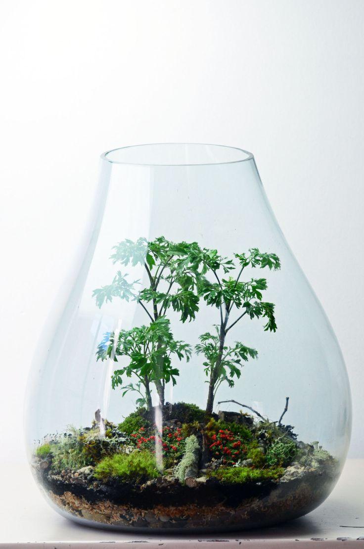 Les 10 meilleures images du tableau green factory des for Plante sous verre