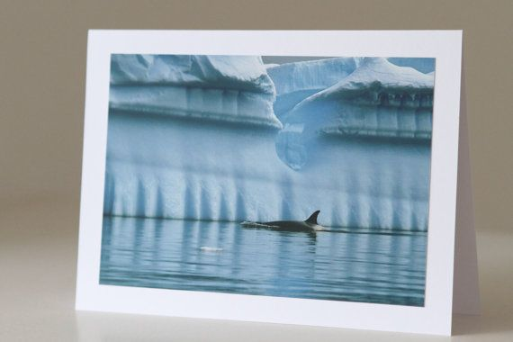 SALE Animal Photo Greeting Card Orca and by EchidnaArtandCards