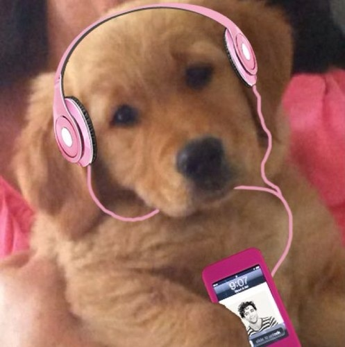 Since Mika is my Favorite Singer and i love him. This is Melachi is dog! She is so cute! But was very young then already listening to her master's music!