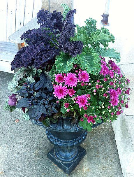 ornamental kale, mums, heuchera, and ornamental black pepper