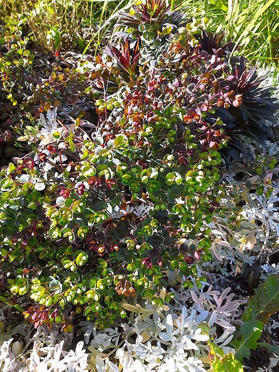 """Conception-""""Les Jardins des Hurlevents """" http://www.plantes-vivaces-hurlevents.com/"""