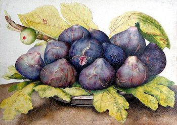 """Giovanna Garzoni was a very talented painter in the 1600's. We love her Plate of Figs with its softness yet intensity of color. Wonderful canvas to work with silk threads to capture the subtle shadings of the fruit and leaves. Measures 10"""" x 14"""" on 14  or 18 mesh mono - $88"""