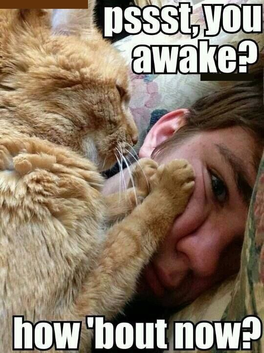 Morning Meme #Awake, #Now | Cutie Patootieeees