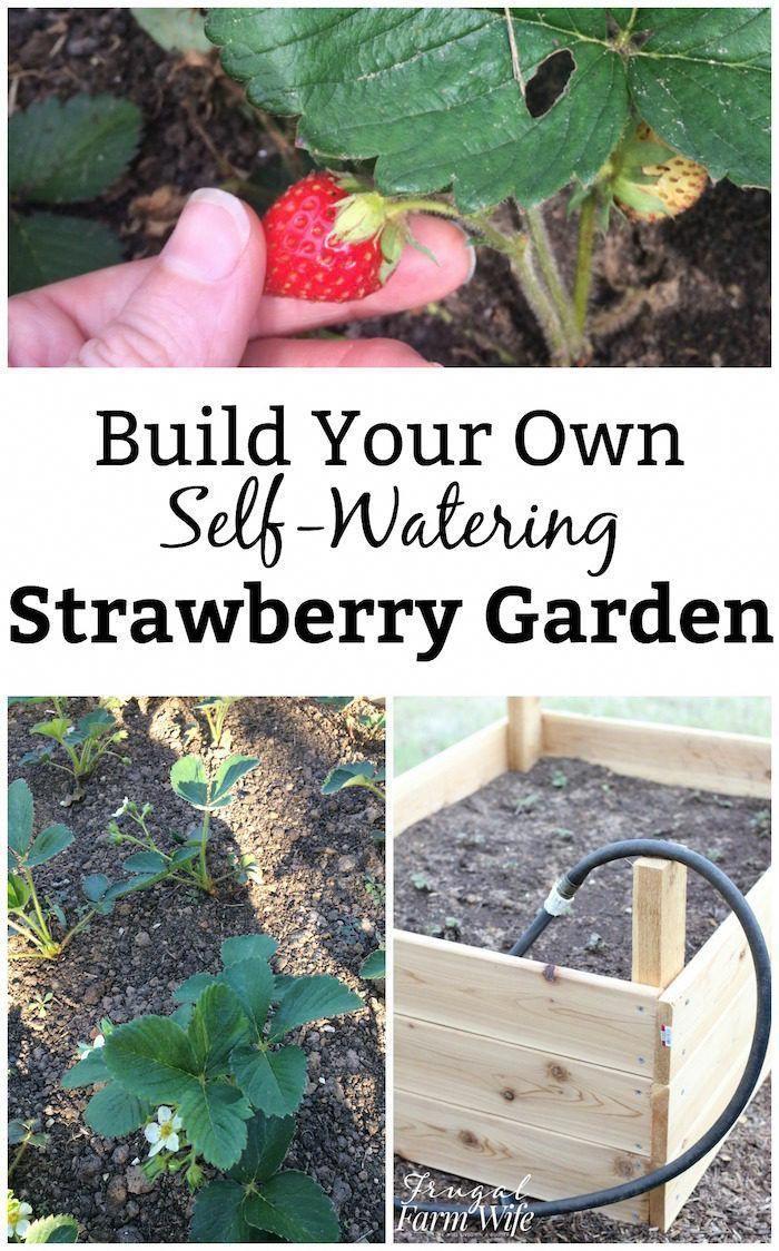 So Bauen Sie Ihr Eigenes Gartenbett Mit Bewasserung In 2020 Erdbeeren Garten Kreative Garten Ideen Gartenbett