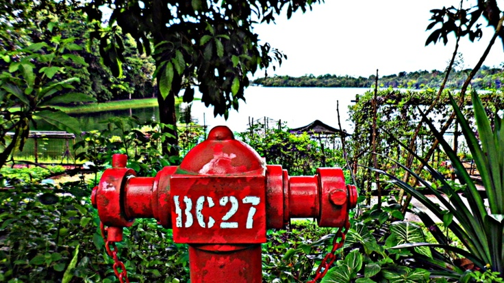 Singapore Zoo - Fire Hydrant     Feb. 2013