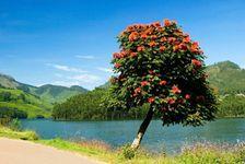 Kerala 5 Star Honeymoon Package