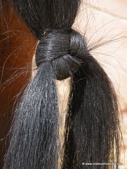 "Horse tail knot. One custom that has been handed down through generations of Great Basin buckaroos is tying a horse's tail into a ""war knot."" The knot keep the horse's tail out of the way, especially when the buckaroo is roping. If the horse is switching its tail, the rope can slip under the horse's tail more easily and cause a wreck. The knot also keeps the tail out of the mud in inclement weather. How to: http://www.cowboyshowcase.com/tying-war-knots.html"