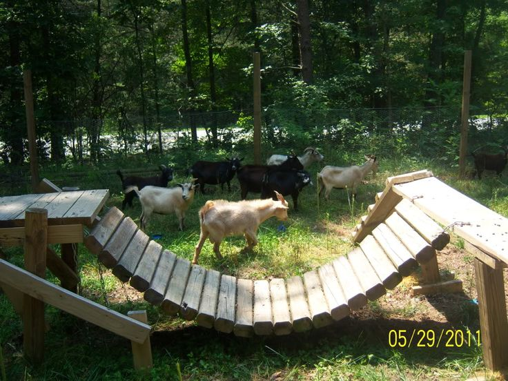 Playhouses For Goats. - Page 3 - The Goat Spot - Goat Forum- #babygoatfarm