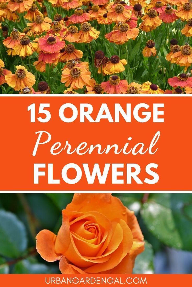 15 Orange Perennial Flowers In 2020 Flowers Perennials Garden Flowers Perennials Perennials