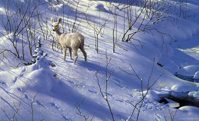 """Зимнее привидение"" (Ghost of winter)"
