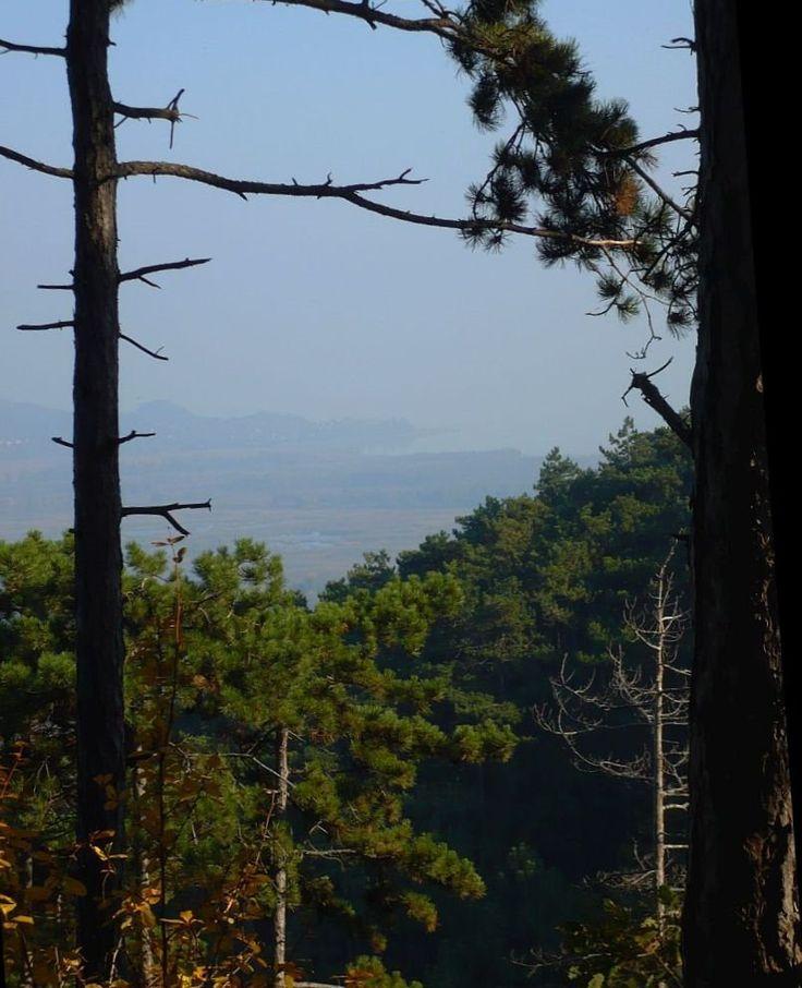 Kilátás a nemesvitai Kísérleti-erdőből