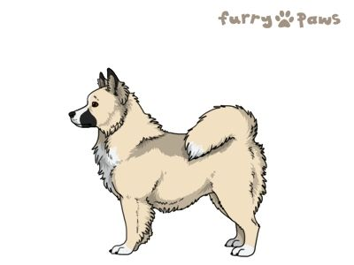Furry Paws // WCH Kip's Daring Wanderer [Lla 14HH 2hh 1.505] *BoB* (#4#5) 11.2's Kennel