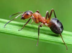 Karıncalar Öldürmeden Nasıl Uzaklaştırılır?