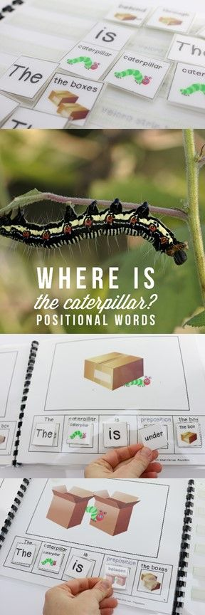 Where Is the caterpillar? An emergent reader to practice positional words, sight words and prepositions! Great for building reading fluency!