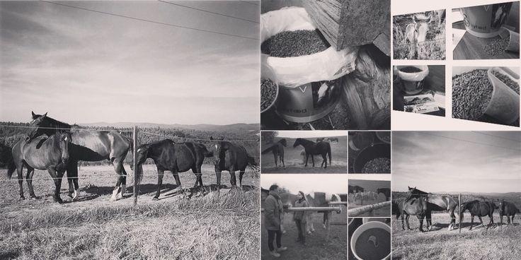 Péče o koně v zimním období je velmi náročné. Je důležité nepodcenit kvalitní stravu a celkovou péči. Doporučujeme proto zařadit do stravy produkt Silyfeed V, který je ze zpracovaného plodu ostropestřce mariánského v kombinaci s plodem včelníku moldavského.   Silyfeed V podávejte koním pro zabezpečení správného metabolismu tuku a ochrany jater.