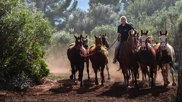 Horses training  by Photosbytavo