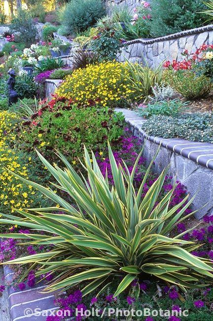 Hillside garden with undulating retaining wall. Saxon Holt/PhotoBotanic Garden Library