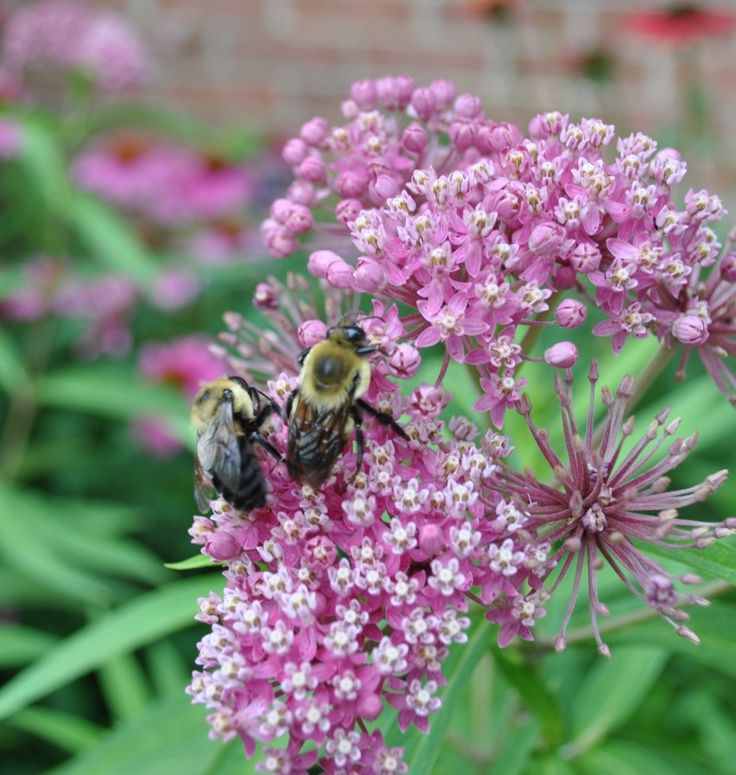 """""""Making Highways Safe for Bees, Butterflies and other Pollinators"""" -- USDOT Transportation Secretary Anthony Foxx"""