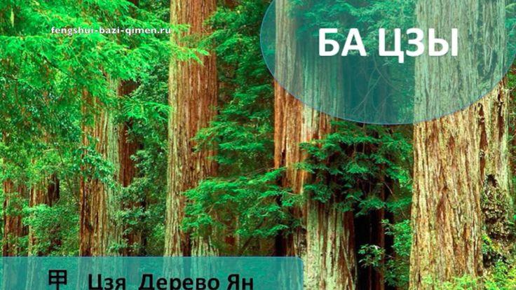 #44 甲, Цзя, Дерево Ян в Ба Цзы l Ба Цзы
