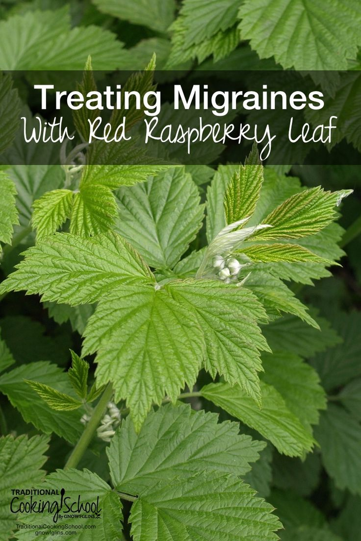 Treating Migraines With Red Raspberry Leaf | Migraines are no fun. When I suddenly began getting migraines, always around my period, a friend asked me if I'd been drinking red raspberry leaf tea. I hadn't! So I did an experiment. Could I use red raspberry leaf for migraines? I did -- and it worked! Here's how! | TraditonalCookingSchool.com