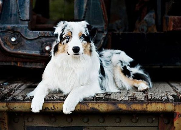 classification of dog personalities Variety within a species natural selection within a population of animals, plants or any living organisms, there will be inherited variationswithin each species the individuals with the.