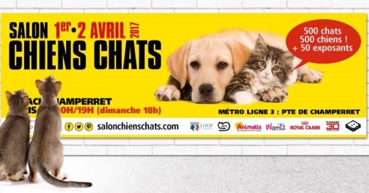 Salon Chiens Chats : ce week-end, venez rencontrer vos animaux de compagnie préférés !