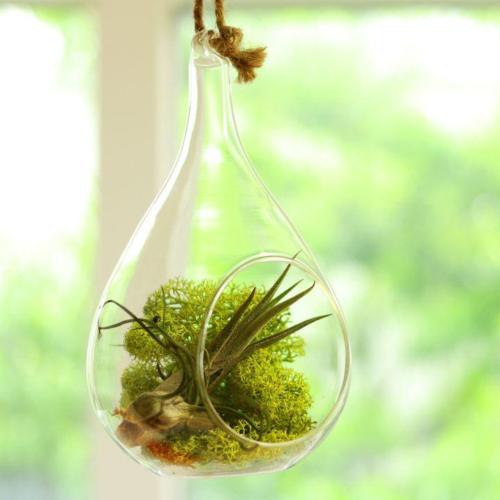 エアプランツで植物の癒し効果を