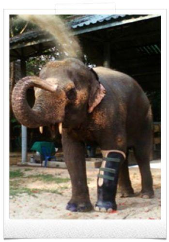 Lampang-Thailande - hôpital des éléphants