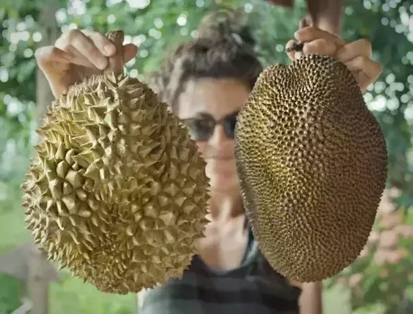 What is the difference between durian and jackfruit? - Quora