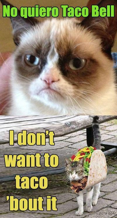 Taco Bell Cat Meme