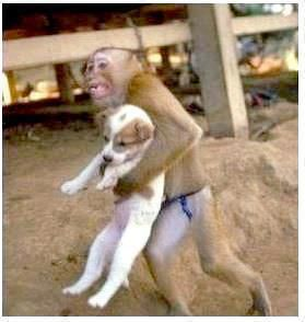 Monkey saving a puppy from an explosion in China