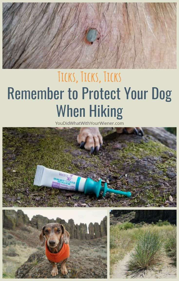 Ticks Ticks Ticks Remember To Protect Your Dog When Hiking
