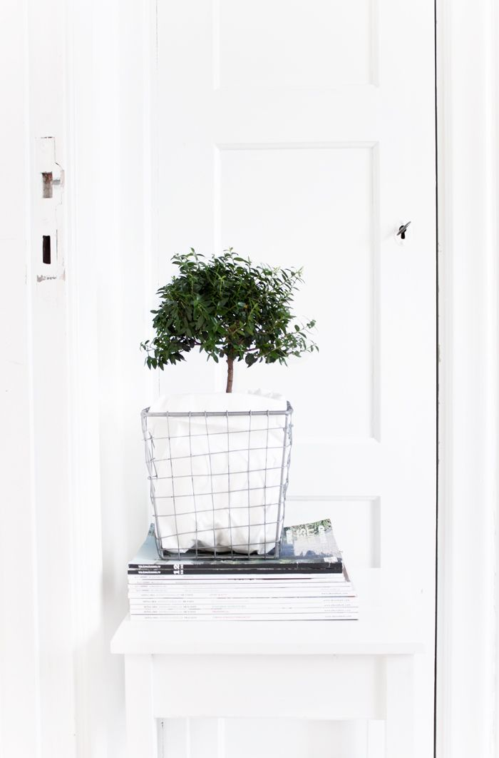 Great styling with an olive tree