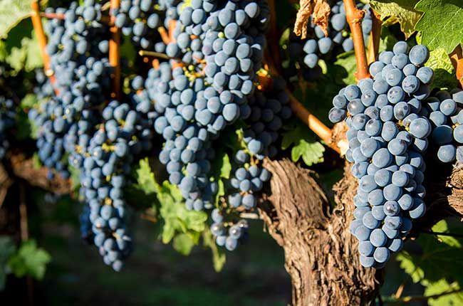 3 World Famous Merlot Wines