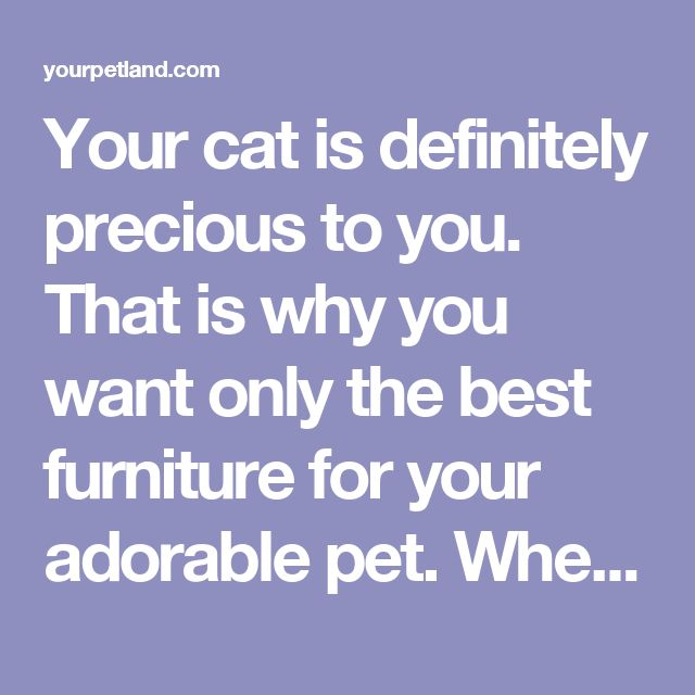 Your cat is definitely precious to you. That is why you want only the best furniture for your adorable pet. When searching for a piece of furniture for your feline companion at home, it is important to consider that its weight capacity should be able to accommodate