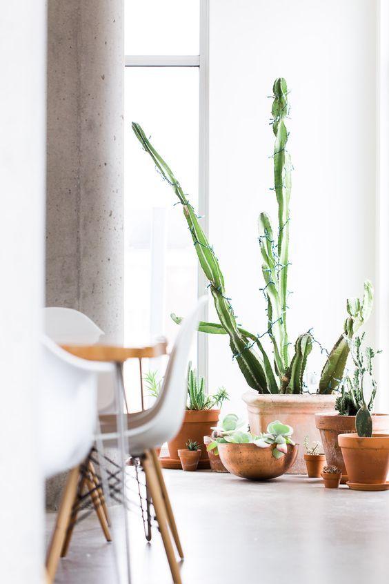 8x Grote cactussen in het interieur - MakeOver.nl